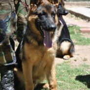 Entrega de Certificados Curso de Guias de Perros de Guerra