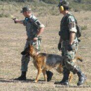 La Seccion Perros de Guerra de la ESFA realizó tiro terrestre